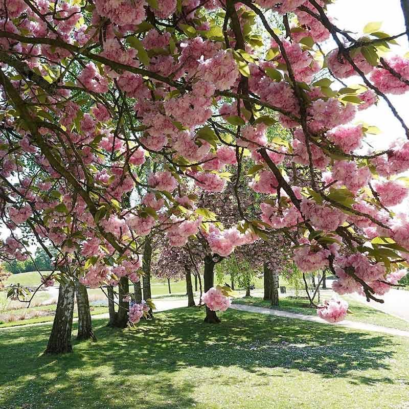 donde queda parque floral de paris