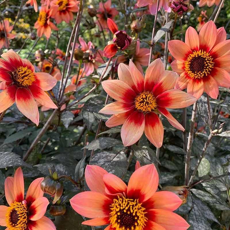 parque floral de paris horarios