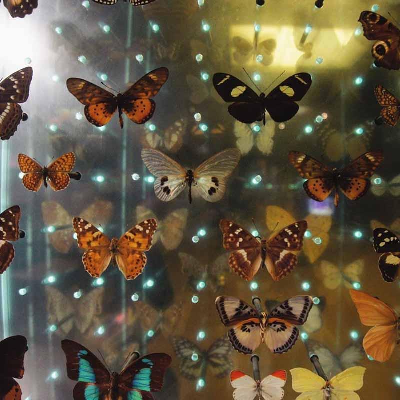 adonde queda el museo de historia natural en paris