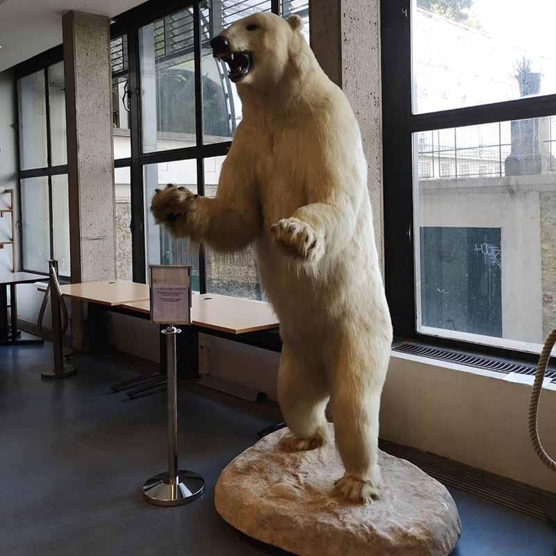 como llegar al museo de historia natural de paris