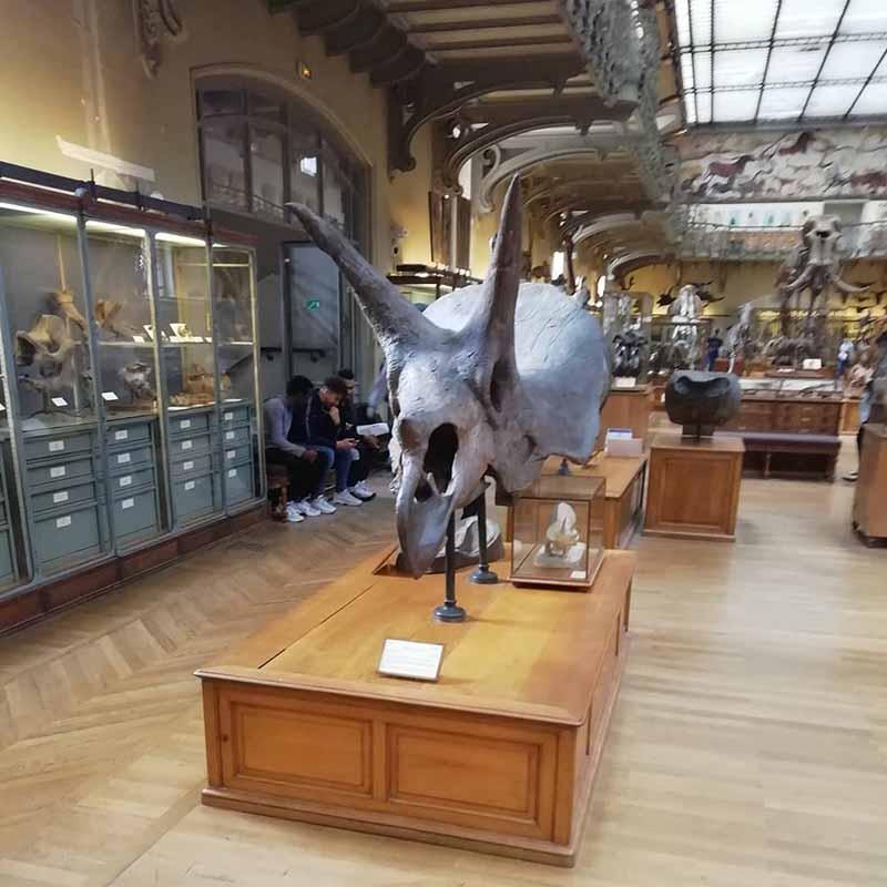 cuanto cuesta la entrada al museo de historia natural de paris