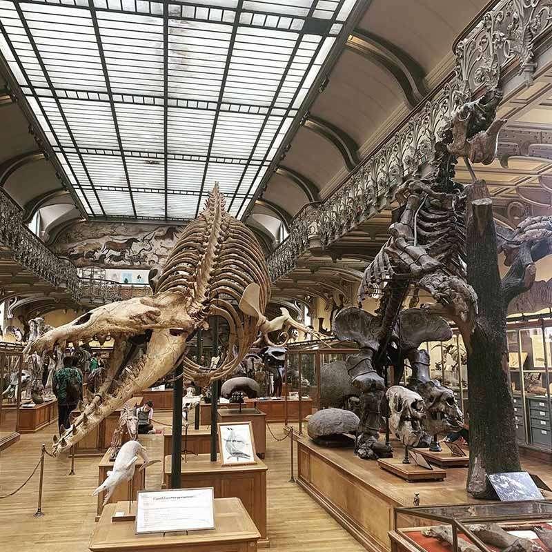 galeria de la evolucion de paris
