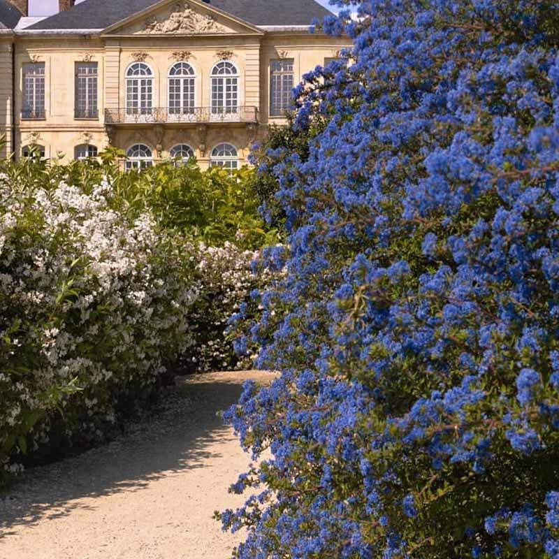 jardin del museo rodin