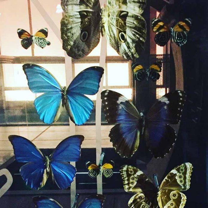 museo historia natural paris entradas