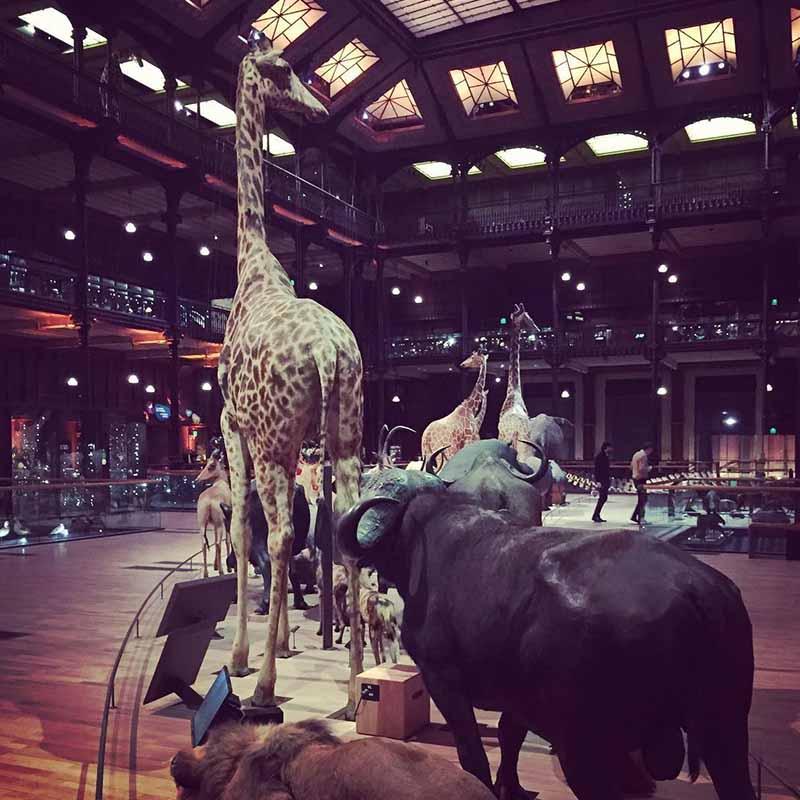 museo historia natural paris